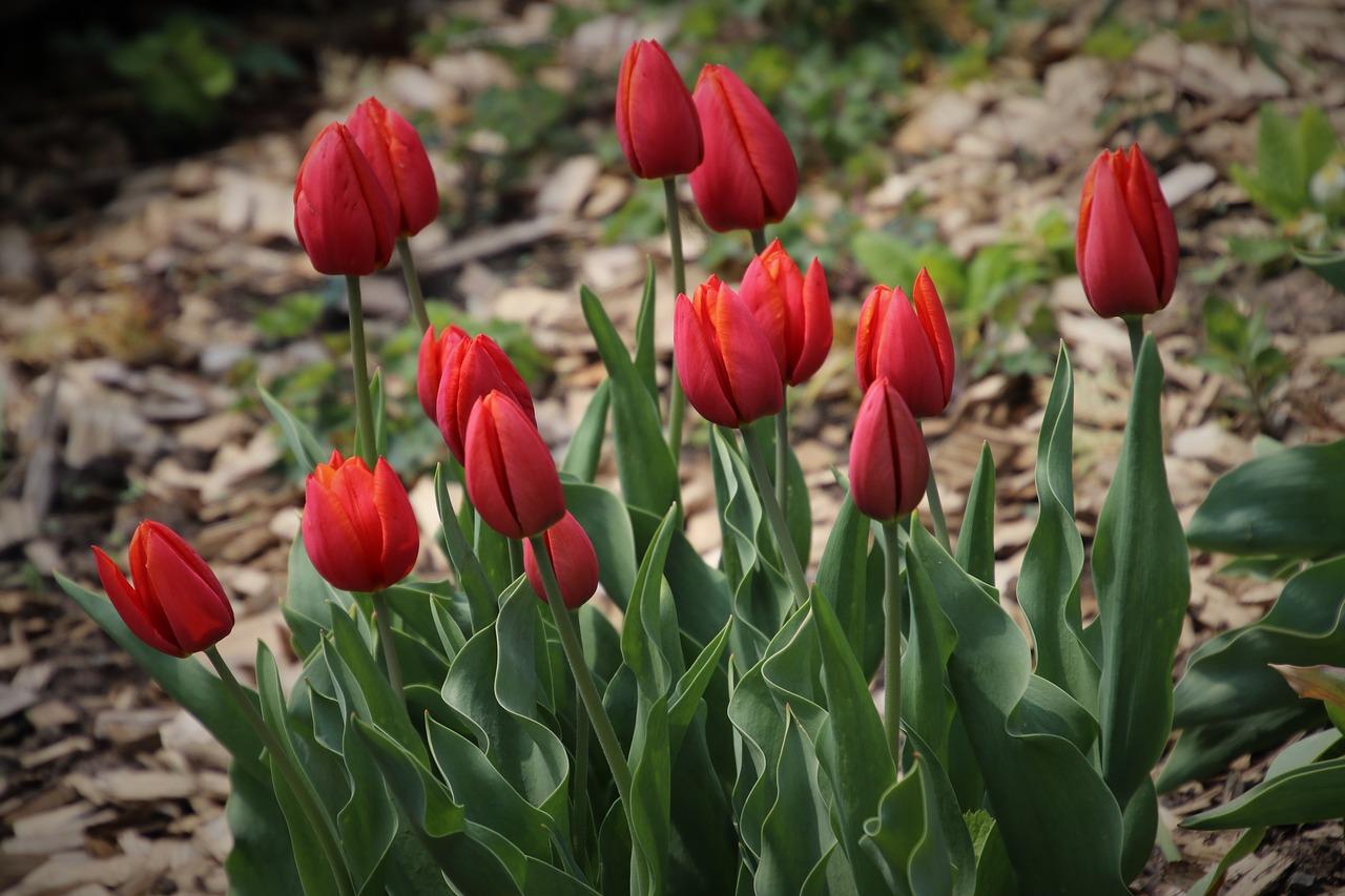 Kwiecień w ogrodzie – jakie prace należy wykonać?